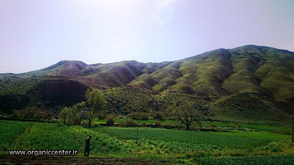 همکاری شرکت گوکرن با کشاورزان استان زنجان در راستای تولید محصولات ارگانیک