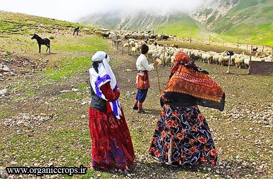 توسعه پایدار روستایی