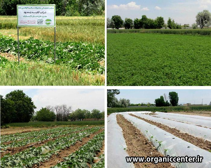 Gokarn farm No2 khomeinishahr www.organiccenter.ir