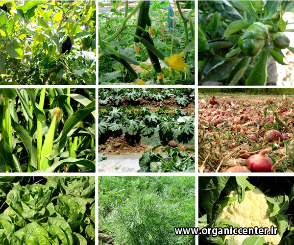 Gokarn products farm No2 www.organiccenter.ir