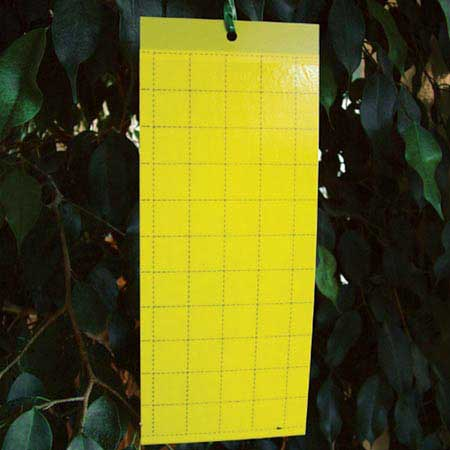 Yellow-sticky-traps